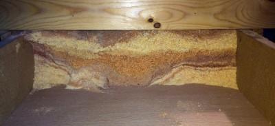 sawdust_strata